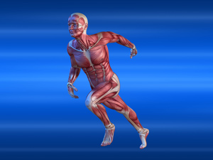 Optimise sport performance, be better, avoid / reduce injury with Afferent Input muscle testing Chiropractor. Neuro Musculo-Skeletal function (msk). Solve chronic / repeat problems. Mendip Chiropractic, Shepton - for Wells, Glastonbury, Frome Somerset